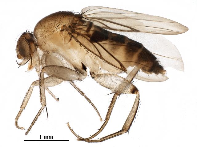 the fly-II